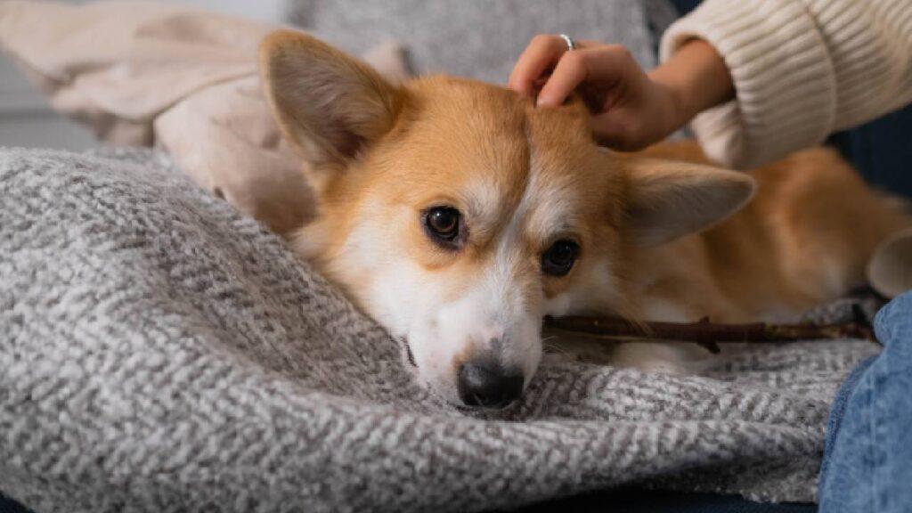 hond dagopvang