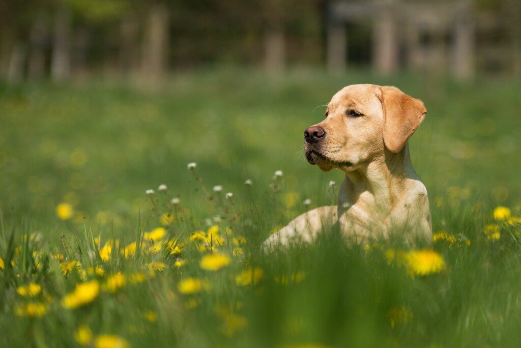 dagopvang hond
